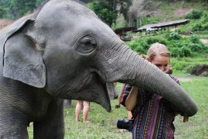 Elephant Jungle Sanctuary - Chiang Mai, Thailand