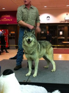 There's A She-Wolf In CFSU