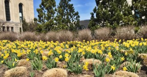 Spring (and so much more) has Sprung on Campus